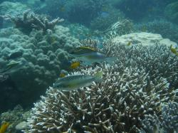 Tauchen Fische1