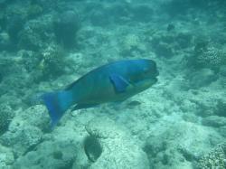 Tauchen Fische2